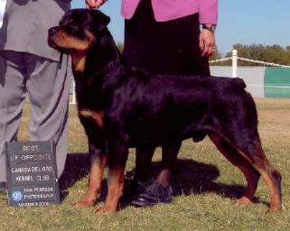 CRAJO ROTTWEILERS SHOW NEWS
